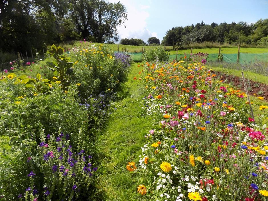 Field full of beautiful flowers