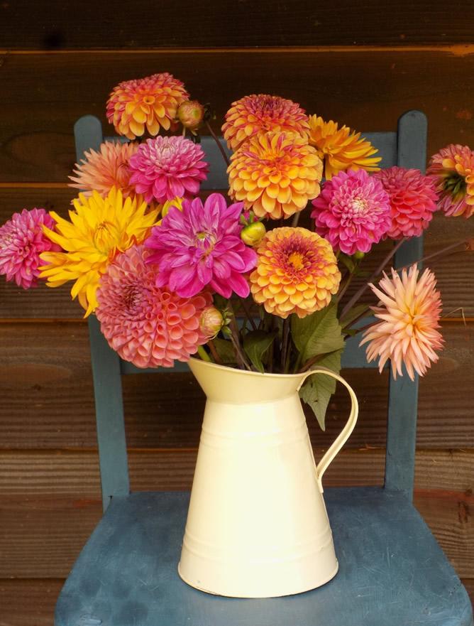 Jug of summery flowers