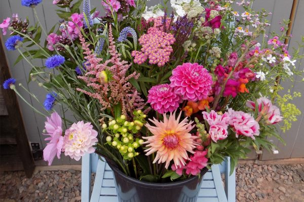 bucket of beautiful mixed flowers